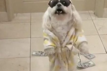 """Plies 💧💧 """"I Got Drip For Sale"""" Dog Video ( Viral Flame Network)"""